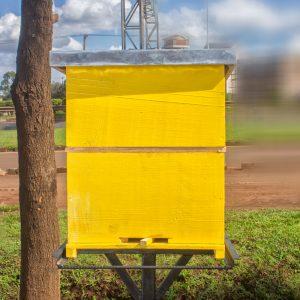 Box Hive